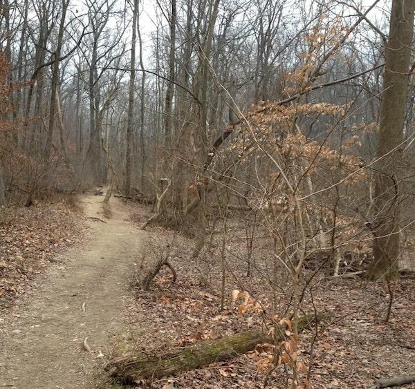 woods-600px